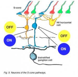 S-neurons