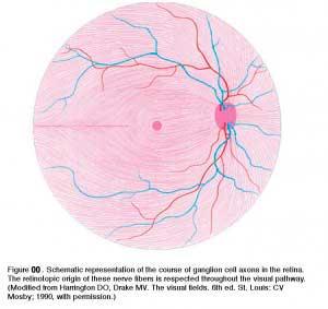 nervefibershuman