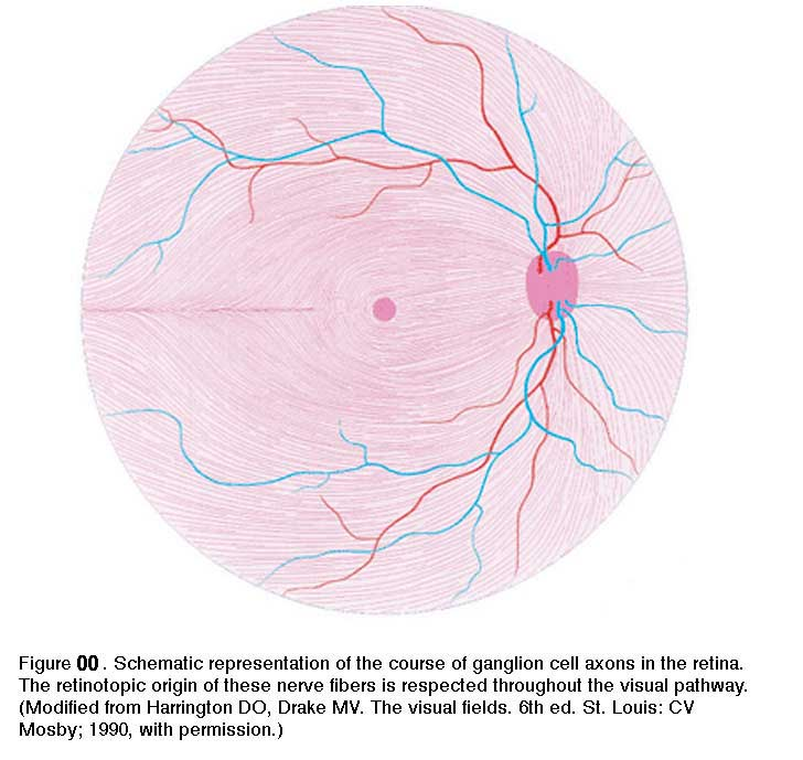 1.2 Simple Anatomy of the Retina. By Helga Kolb - Webvision