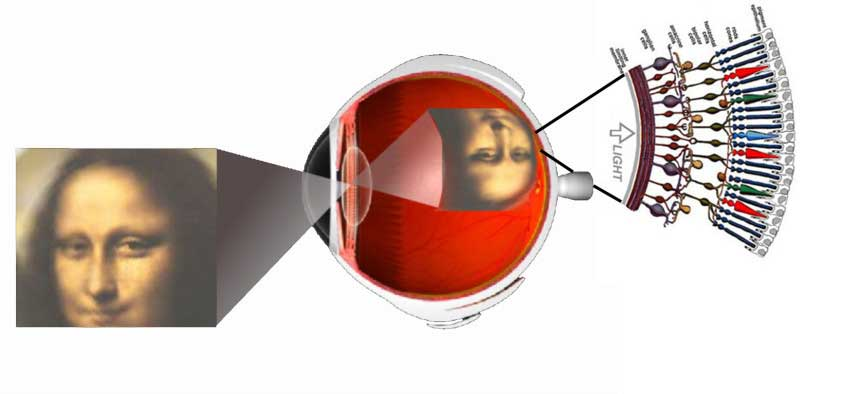 Eye_intro
